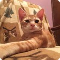 Adopt A Pet :: Vinny - Raritan, NJ