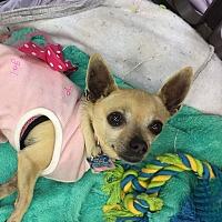 Adopt A Pet :: Bonnie - Valencia, CA