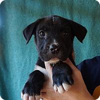 Adopt A Pet :: JT - Oviedo, FL
