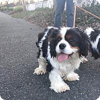 Adopt A Pet :: Freddy - Lafayette, CA