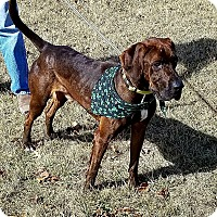 Adopt A Pet :: Jupiter - Cameron, MO