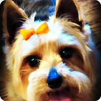 Adopt A Pet :: Lara and Salome - BONDED PAIR - Tijeras, NM