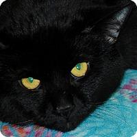 Adopt A Pet :: Wolverine - Salem, WV