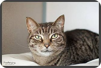 Domestic Shorthair Cat for adoption in Centre Hall, Pennsylvania - Sonya