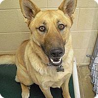 Adopt A Pet :: Delgado - Wickenburg, AZ