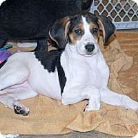 Adopt A Pet :: Maddie - Minneola, FL