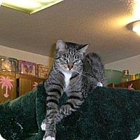 Adopt A Pet :: Gimini - Laguna Woods, CA