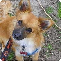 Adopt A Pet :: RYKER - Hesperus, CO