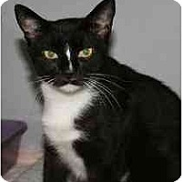Adopt A Pet :: Ashley - Marietta, GA