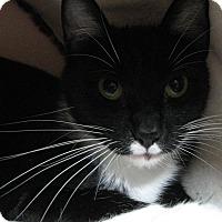 Adopt A Pet :: BUNNY - Brea, CA