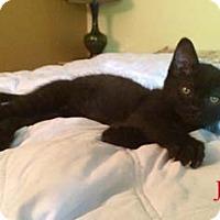 Adopt A Pet :: Jet - Merrifield, VA