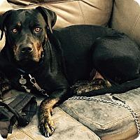 Adopt A Pet :: Baby Girl - Van Nuys, CA