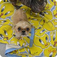 Adopt A Pet :: PUMPKIN - Sandusky, OH