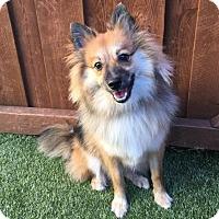 Adopt A Pet :: Tazzle - Dallas, TX