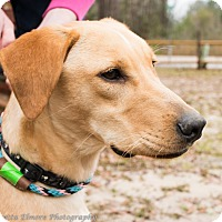 Adopt A Pet :: Jake - Daleville, AL