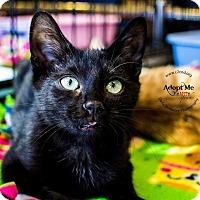 Adopt A Pet :: A..  Dustin - Mooresville, NC