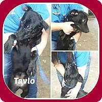 Adopt A Pet :: TAVLO - Malvern, AR