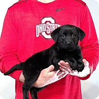 Adopt A Pet :: Daisy Maye - South Euclid, OH