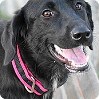 Adopt A Pet :: Shadow - Jarrell, TX