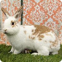 Adopt A Pet :: Angel - San Diego, CA