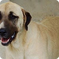 Adopt A Pet :: Lyssa - Joplin, MO