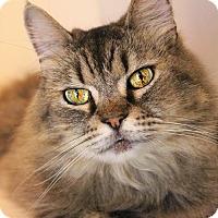Adopt A Pet :: Freckles - Benton, LA