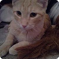 Adopt A Pet :: Diego - Chandler, AZ