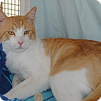 Adopt A Pet :: Hercules - Palmdale, CA