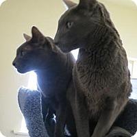 Adopt A Pet :: Darwin - Prescott, AZ