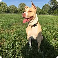 Adopt A Pet :: *ADAH - Winder, GA