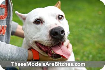 Bull Terrier Mix Dog for adoption in Beverly Hills, California - Lulu
