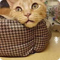 Adopt A Pet :: Daisy aka Rachel - McKinney, TX
