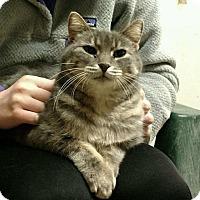 Adopt A Pet :: Dora - Saginaw, MI