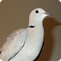 Adopt A Pet :: Sally - Lenexa, KS