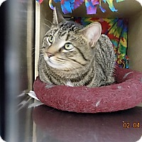 Adopt A Pet :: Bowie(Reservation Rescue) - Roseville, MN