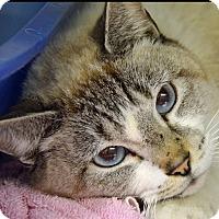 Adopt A Pet :: 10310118 - Brooksville, FL