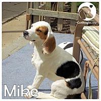 Adopt A Pet :: Mike - Novi, MI