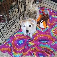 Adopt A Pet :: Fred - Brownsville, TX