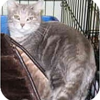 Adopt A Pet :: Sheila - Milwaukee, WI