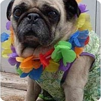 Adopt A Pet :: Minnie-VA - Suffolk, VA