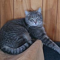 Adopt A Pet :: HOPEY - San Pablo, CA