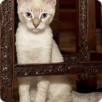 Adopt A Pet :: FlurryS - North Highlands, CA