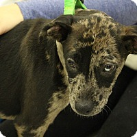 Adopt A Pet :: Dory - Lakeville, MN
