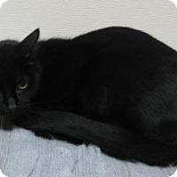 Adopt A Pet :: Cinder - Gary, IN