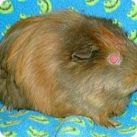 Adopt A Pet :: Fabuloso - Steger, IL