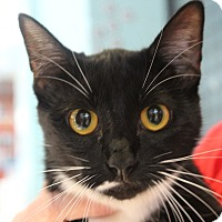 Adopt A Pet :: Tatiana - Sarasota, FL