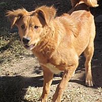 Adopt A Pet :: **BAILEY - Peralta, NM