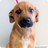 Adopt A Pet :: ADOPTED!!!   Riley - Channahon, IL