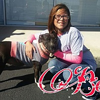 American Staffordshire Terrier Mix Dog for adoption in Union City, Tennessee - Becka