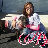 Adopt A Pet :: Becka - Union City, TN
